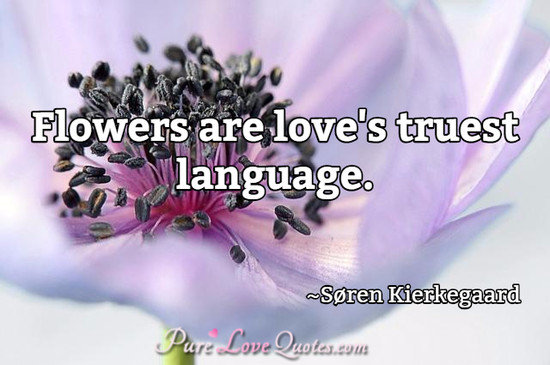 Quotes About Flowers And Love Flowers are love's truest language. | PureLoveQuotes Quotes About Flowers And Love