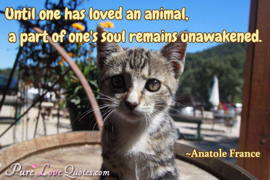 Until One Has Loved An Animal A Part Of One S Soul Remains